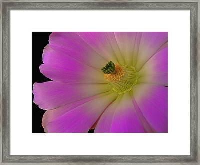 Crawling Alicoche Framed Print