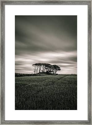 Crawton Copse Framed Print by Dave Bowman
