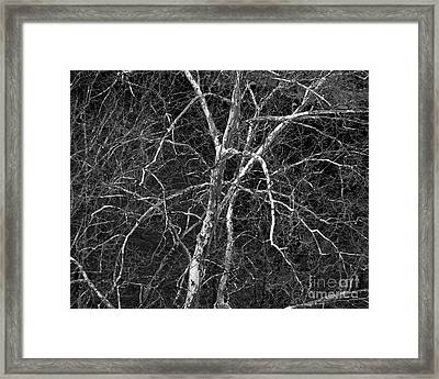 Framed Print featuring the photograph Crazy Camouflage Tree by Kristen Fox