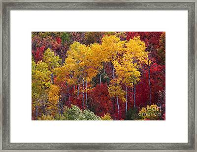 Crazy Color Framed Print
