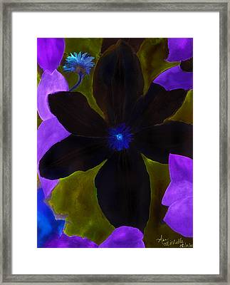 Crazy Exposure Clematis Framed Print