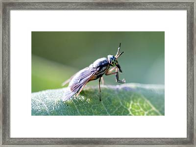 Crazy-eyed Fly Framed Print