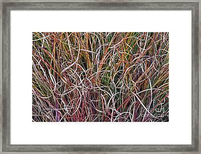 Crazy Grasses Framed Print by Judy Wolinsky