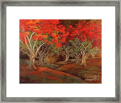 Crazy Orange Trees Framed Print