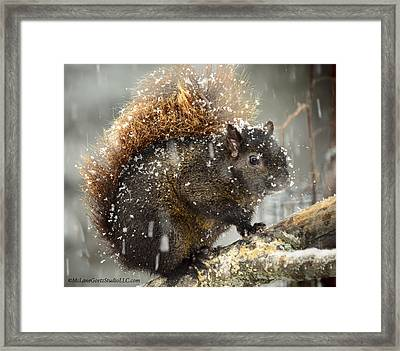 Crazy Snow Squirrel Framed Print