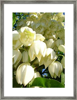 Cream Flowers Of A Cordyline Cabbage Tree  Framed Print by Tracey Harrington-Simpson