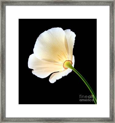 Cream Poppy Glow Framed Print