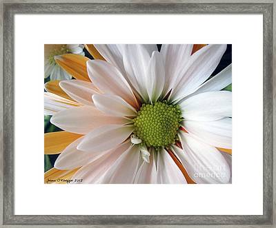 Framed Print featuring the photograph Creamsicle by Jean OKeeffe Macro Abundance Art