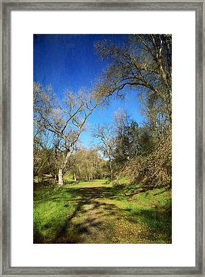 Creation Framed Print by Laurie Search