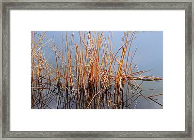 Creations Illusion Framed Print by Steven Milner
