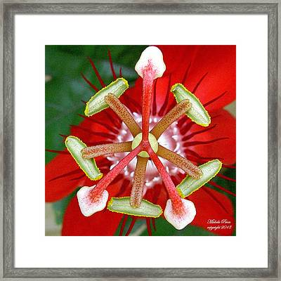 Alignment With What Is Limited Edition.  Framed Print