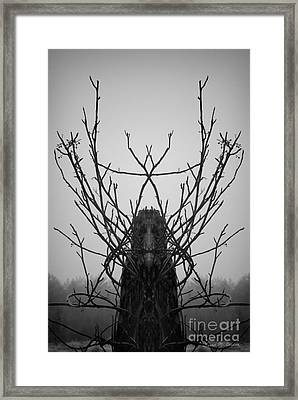 Creature Of The Wood Bw Framed Print by David Gordon