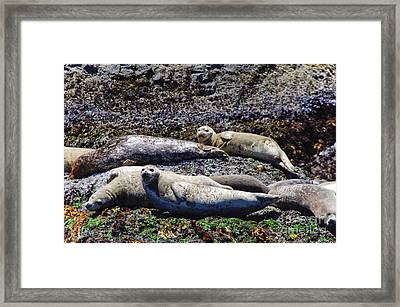 Creatures Comfortable Framed Print