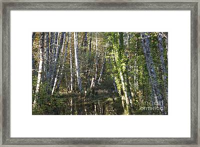 Creek Guardians Framed Print by Terri Thompson