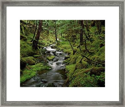 Creek In Temperate Rainforest Framed Print