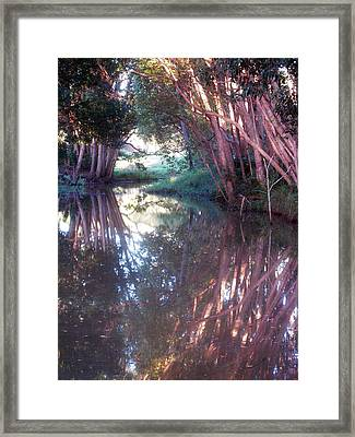 Creek Magic Framed Print