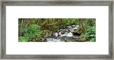 Creek Olympic National Park Wa Usa Framed Print by Panoramic Images