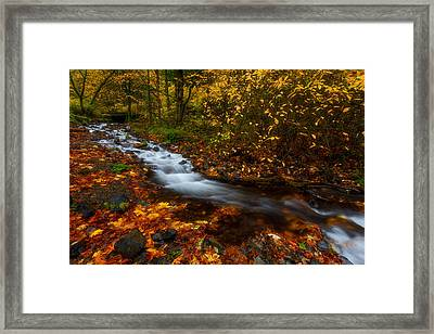Creekside Colors Framed Print by Darren  White