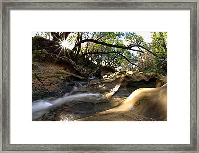 Creekside Sunrise Framed Print by Donna Blackhall