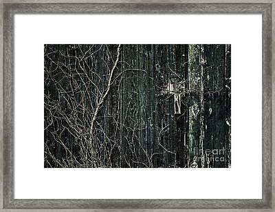 Creeper Framed Print by Andrew Paranavitana