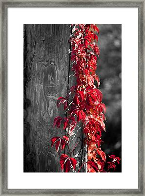 Creeper On Pole Desaturated Framed Print by Teresa Mucha