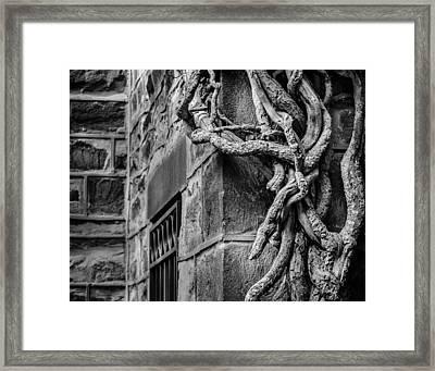 Creeper Framed Print
