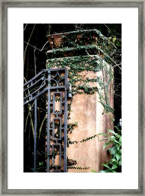 Creeping Fig Framed Print by Tara Miller