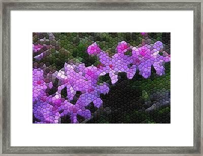 Creeping Phlox Framed Print by Kathryn Meyer