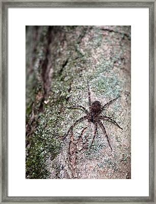 Creepy Spider Framed Print by Karol Livote