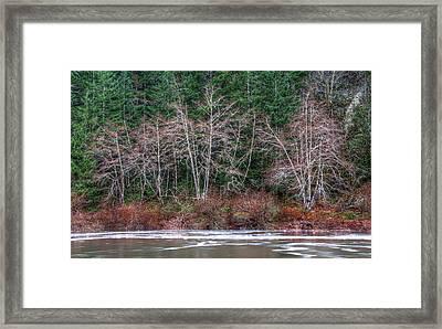 Creepy Trees Framed Print by James Wheeler