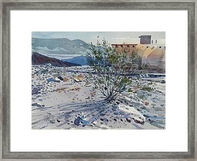Creosote Bush Framed Print