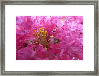 Crepe Myrtle In The Middle Framed Print by Fortunate Findings Shirley Dickerson