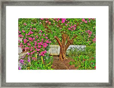 Framed Print featuring the photograph Crepe Myrtle In Wiliamsburg Garden by Jerry Gammon