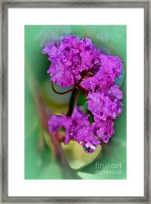 Crepe Myrtle With Droplet By Kaye Menner  Framed Print