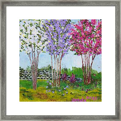 Crepe Myrtles Framed Print