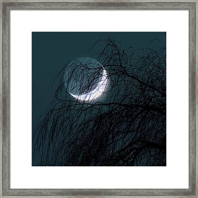 Crescent Moon Behind A Tree Framed Print