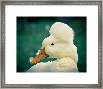 Crested Duck Framed Print