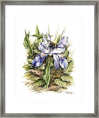Framed Print featuring the painting Crested Dwarf Iris by Bob  George