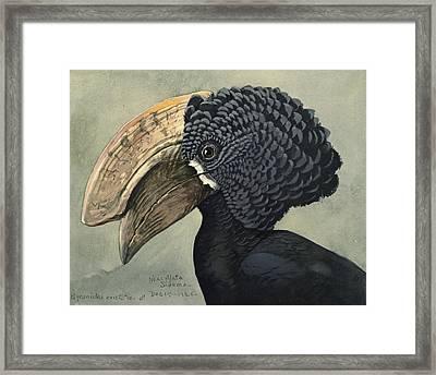 Crested Hornbill Framed Print