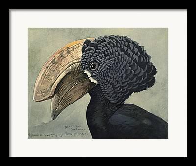 Hornbill Paintings Framed Prints