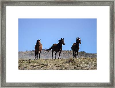 Cresting The Ridge Framed Print by Mike  Dawson