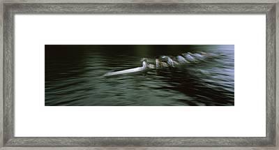 Crew Racing, Seattle, Washington State Framed Print