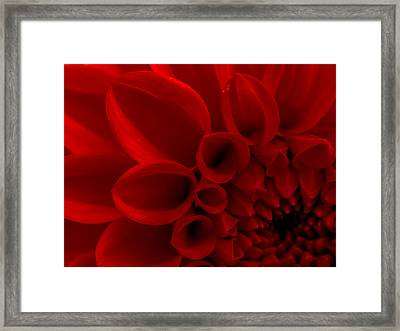 Crimson Dahlia Macro Framed Print by Kaleidoscopik Photography