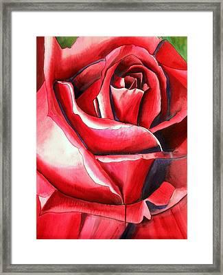 Crimson Glory Rose Framed Print by Sacha Grossel