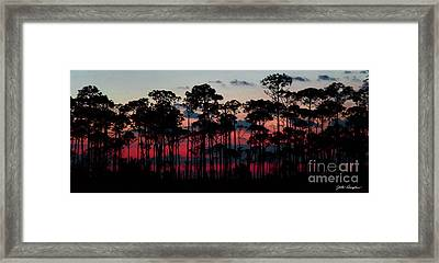 Crimson In The Pines Framed Print