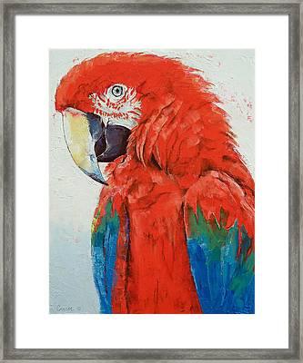 Crimson Macaw Framed Print