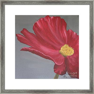 Crimson Red Garden Cosmos Framed Print by Christiane Schulze Art And Photography