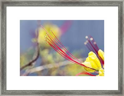 Crimson Threads Framed Print by Linda Lees