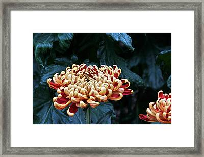 Crimson Tide Irregular Incurve Mum Framed Print by Byron Varvarigos