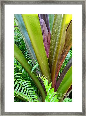 Framed Print featuring the photograph Crinum Lily And Ferns by Darla Wood